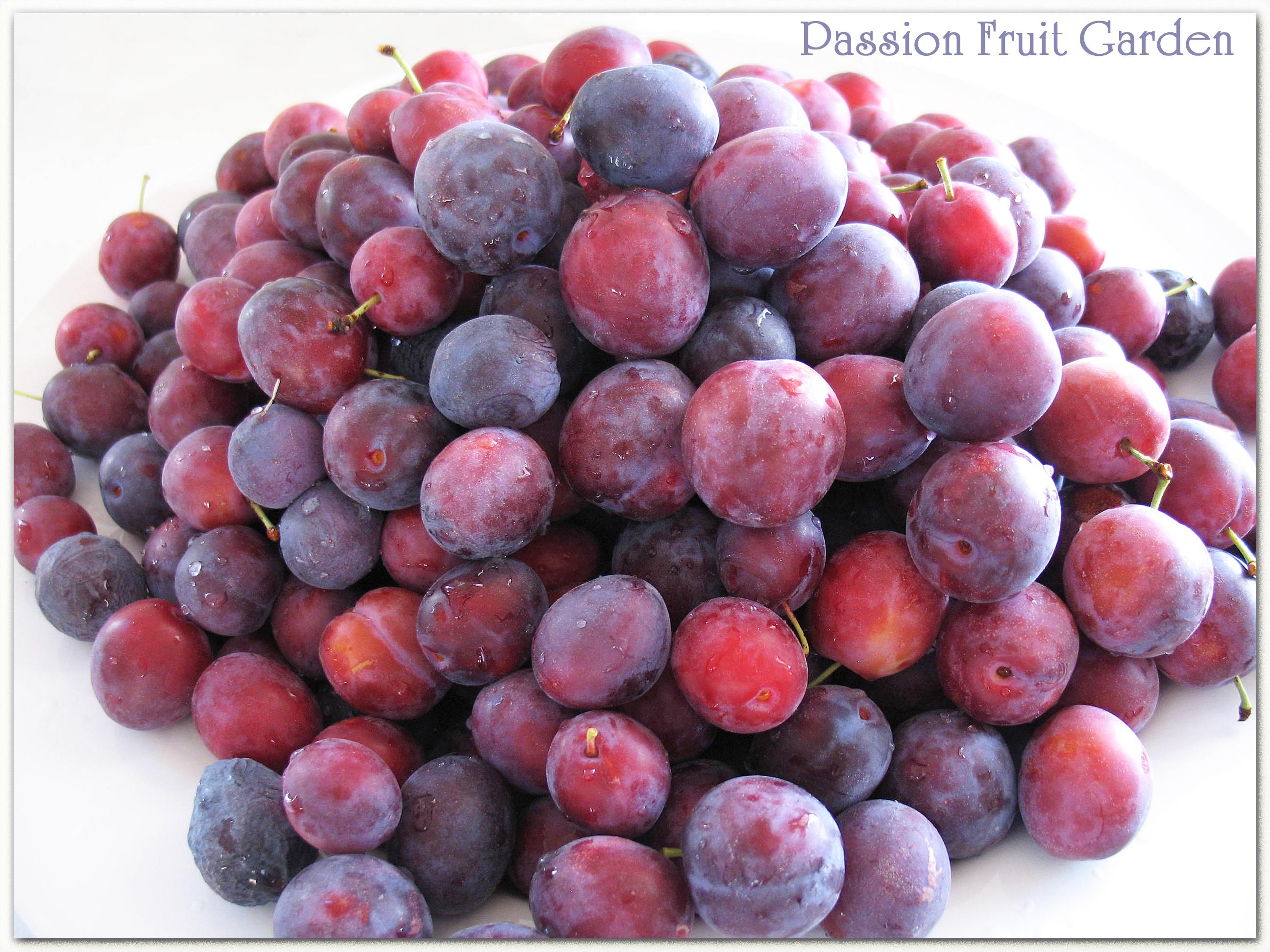 In My Kitchen March 2013 Passion Fruit Garden